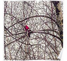 Cardinal Hope Poster
