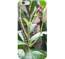 Monarch Caterpillars iPhone Case/Skin