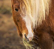 Horse by Svetlana Sewell