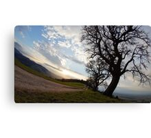 tree in st.m Canvas Print