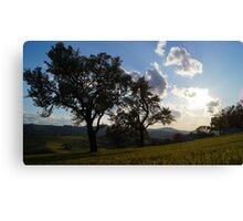 trees in s Canvas Print