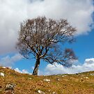 A single tree, Dumfries and Galloway by Dave Hare