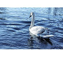Swan On Lake Photographic Print