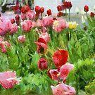 Tulip Garden by James Brotherton