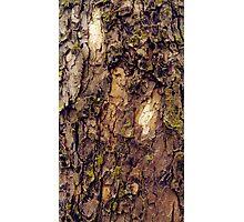Bark Study 2 Photographic Print