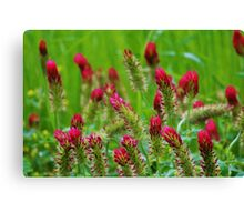 Raspberry Colored Flowers Canvas Print