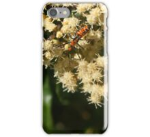 Orange and Black Insect on a Flower iPhone Case/Skin
