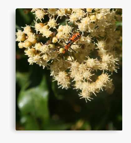 Orange and Black Insect on a Flower Canvas Print