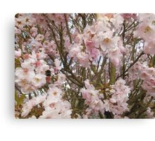 Bee in Cherry Blossom  Canvas Print
