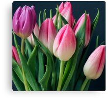 Tulip buds blooming Canvas Print
