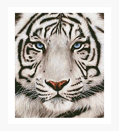 awesome white tiger Photographic Print