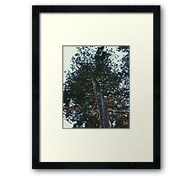 Retro Tree Framed Print