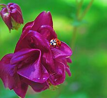 Red and Pink by Eileen McVey