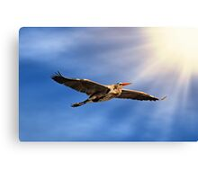Blue Heron into the Sunset Canvas Print