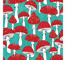 Red mushrooms on turquoise blue Photographic Print