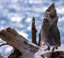 Old Drift Wood Tree Stump Sticker