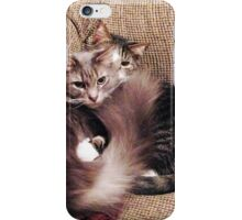 Two Cats Sitting and Snuggling  iPhone Case/Skin