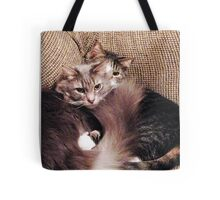 Two Cats Sitting and Snuggling  Tote Bag