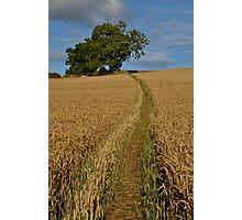 Path Through a Wheat Field Photographic Print