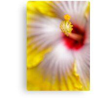 Yellow Hibiscus macro Canvas Print