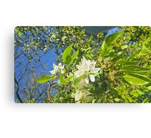 Flowers in White Canvas Print