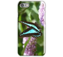 Blue Triangle, Graphium sarpedon iPhone Case/Skin