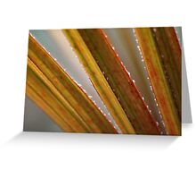 Spiky Stripy  Greeting Card