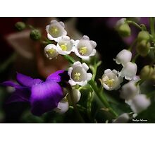 White Bells Photographic Print