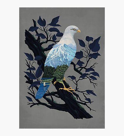 Eaglescape Photographic Print