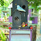 Budgie Box by Penny Smith