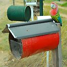 Eastern Rosella Box by Penny Smith