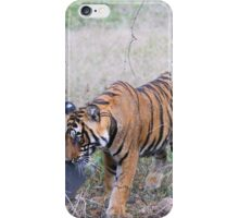 Young Bengal Tiger Prowling iPhone Case/Skin