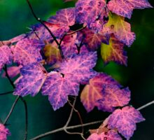 Purple fall  Sticker