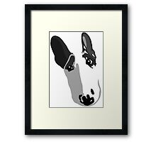 English Bull Terrier Koko Framed Print