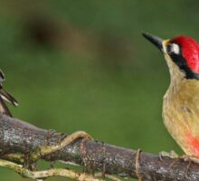 Pair of Black-Cheeked Woodpeckers Sticker