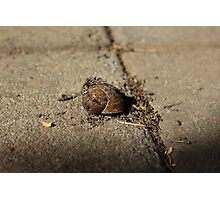 Decaying Snail Photographic Print