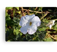 White flower in the grass. Canvas Print