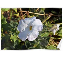 White flower in the grass. Poster