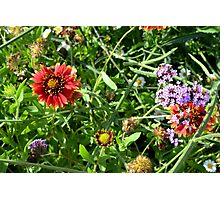 Many beautiful colorful flowers in the park. Photographic Print