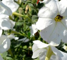 White flowers in the garden, natural background. Sticker