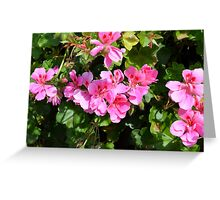 Pink flowers in the garden, natural background. Greeting Card