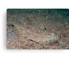 Leopard Flounder off Manado, Indonesia Canvas Print