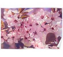 Refreshing spring flowers Poster