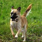 Playfull little dog by ienemien