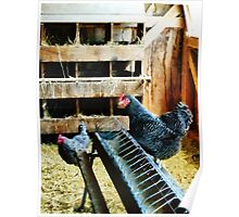 In the Chicken Coop Poster