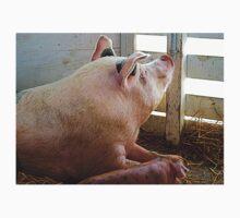 Pig Enjoying the Sun One Piece - Short Sleeve