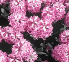 Hyacinths Sticker