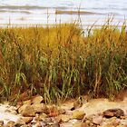 Solitude and Beach Grass by Linda Makiej