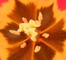 Inside of a tulip. Sticker