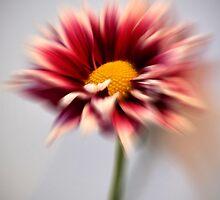 Daisy by Margaret Chilinski